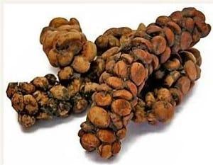 kopi luwak caffè indonesiano zibetto
