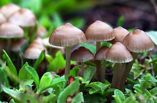 cosa sai sui funghi curiosità
